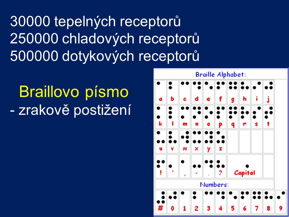 30000 tepelných receptorů 250000 chladových receptorů 500000 dotykových receptorů Braillovo písmo - zrakově postižení