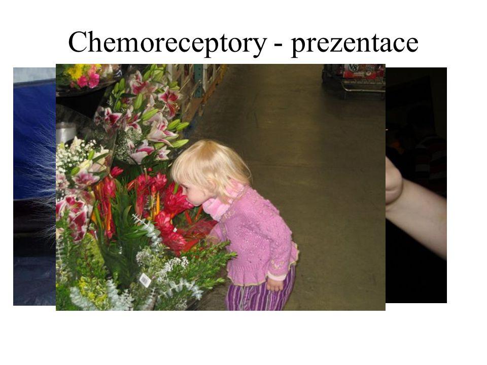 Chemoreceptory - prezentace Všechny informace o změně prostředí jsou zachytávané analyzátory Každé čidlo má přiřaděnou dostředivou dráhu – spojení s C