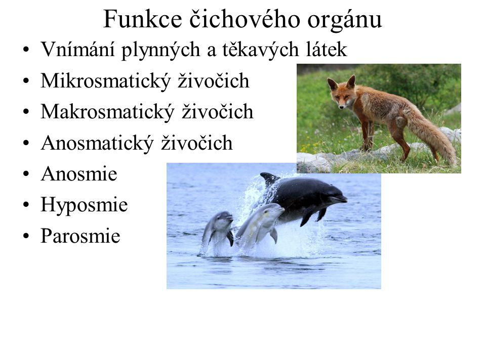 Funkce čichového orgánu Vnímání plynných a těkavých látek Mikrosmatický živočich Makrosmatický živočich Anosmatický živočich Anosmie Hyposmie Parosmie