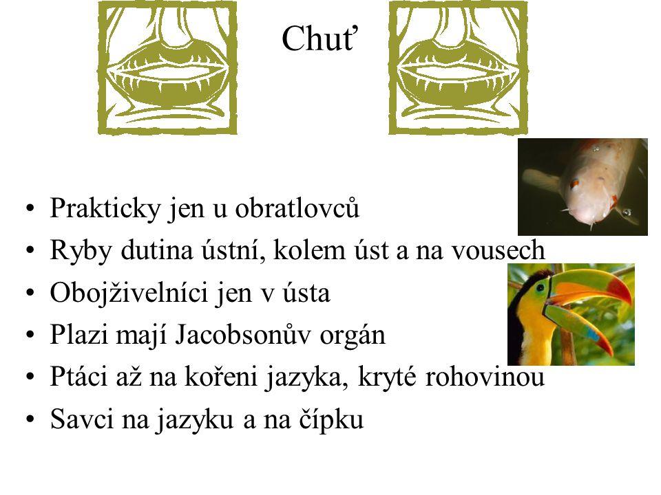 Chuť Prakticky jen u obratlovců Ryby dutina ústní, kolem úst a na vousech Obojživelníci jen v ústa Plazi mají Jacobsonův orgán Ptáci až na kořeni jazy