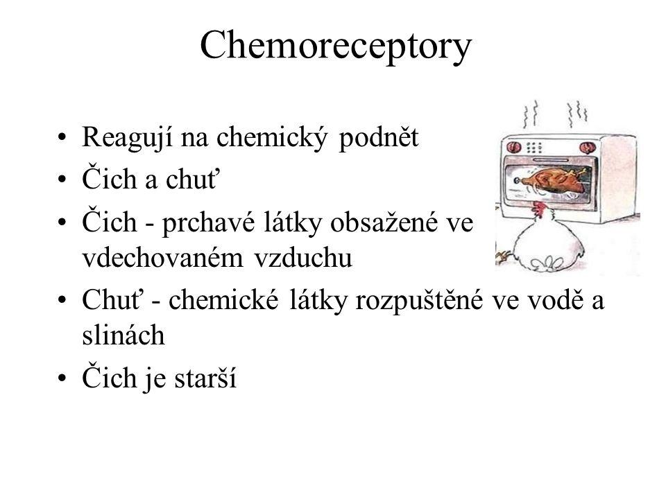 Chemoreceptory Reagují na chemický podnět Čich a chuť Čich - prchavé látky obsažené ve vdechovaném vzduchu Chuť - chemické látky rozpuštěné ve vodě a