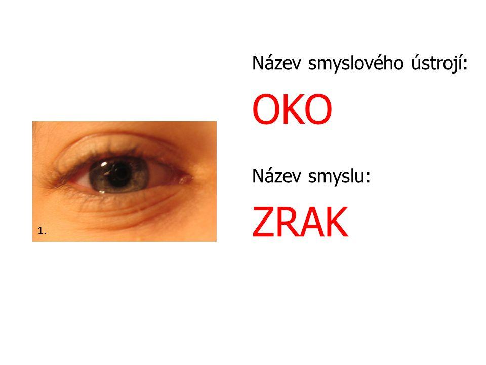 Název smyslového ústrojí: OKO Název smyslu: ZRAK 1.