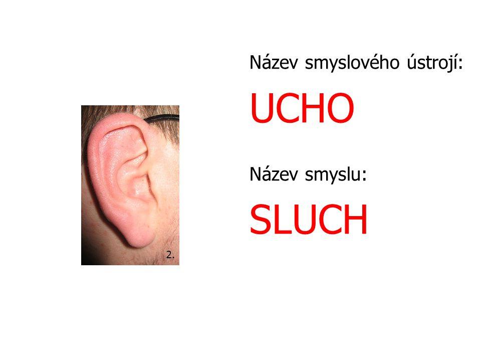 Název smyslového ústrojí: UCHO Název smyslu: SLUCH 2.