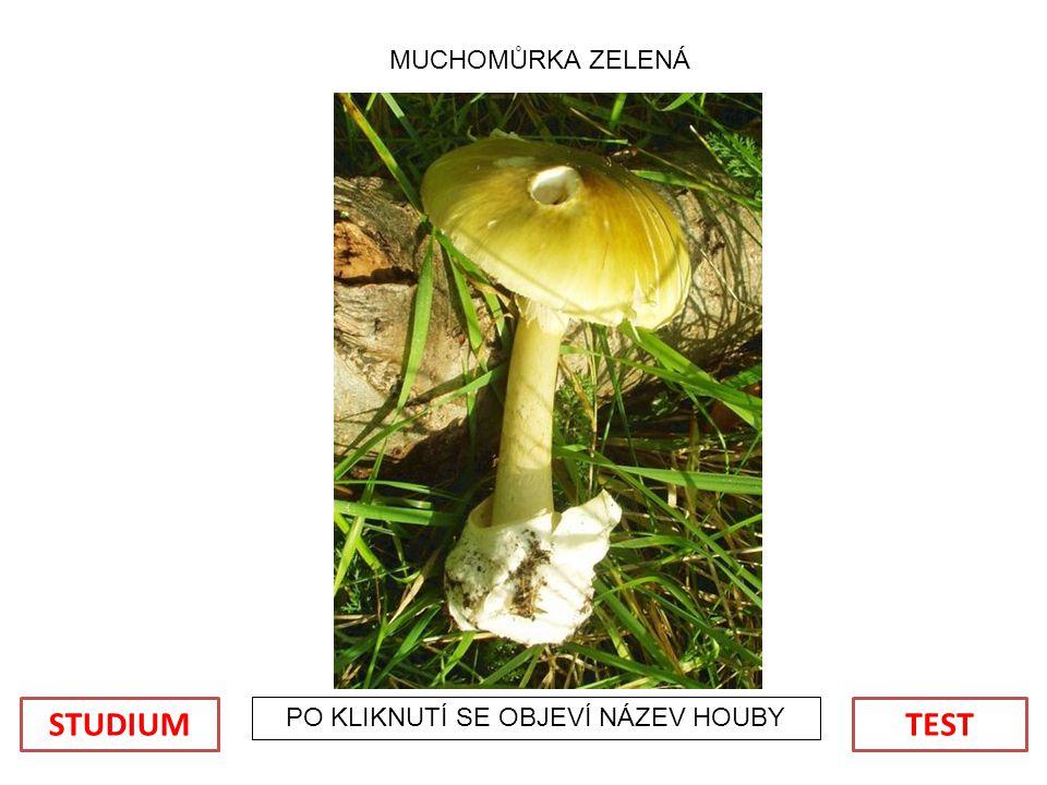 POUŽITÉ OBRÁZKY: Soubor:Amanita muscaria 3 vliegenzwammen op rij.jpg.