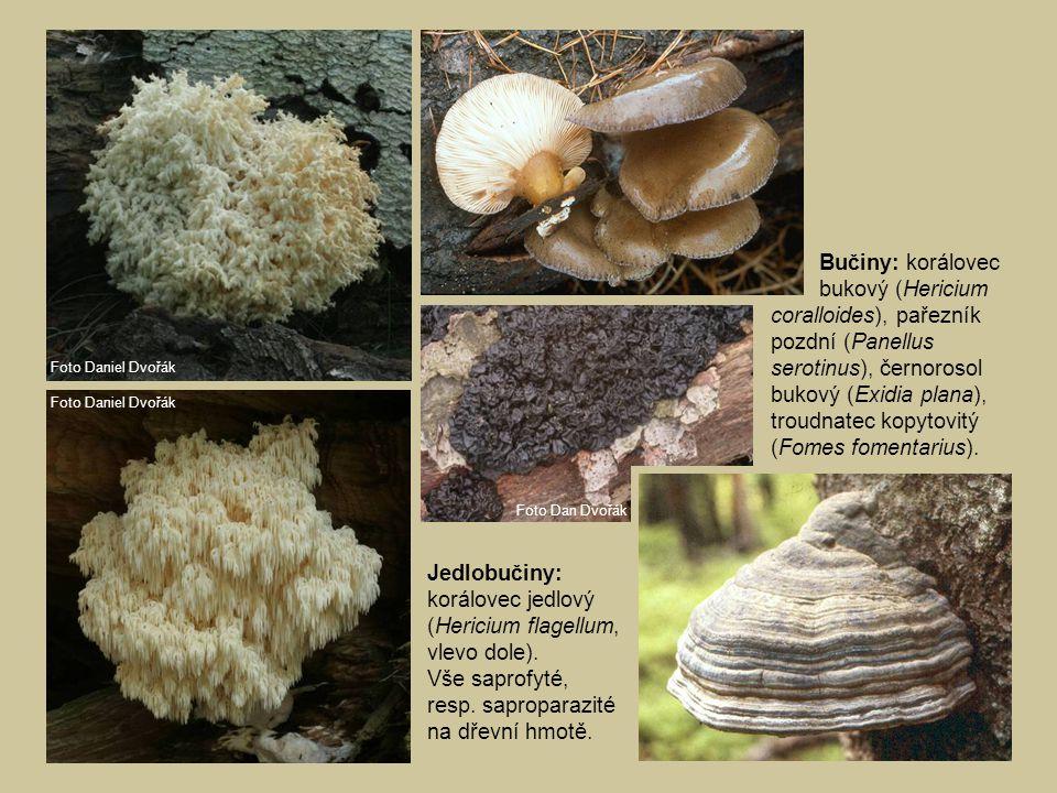 Bučiny: korálovec bukový (Hericium coralloides), pařezník pozdní (Panellus serotinus), černorosol bukový (Exidia plana), troudnatec kopytovitý (Fomes