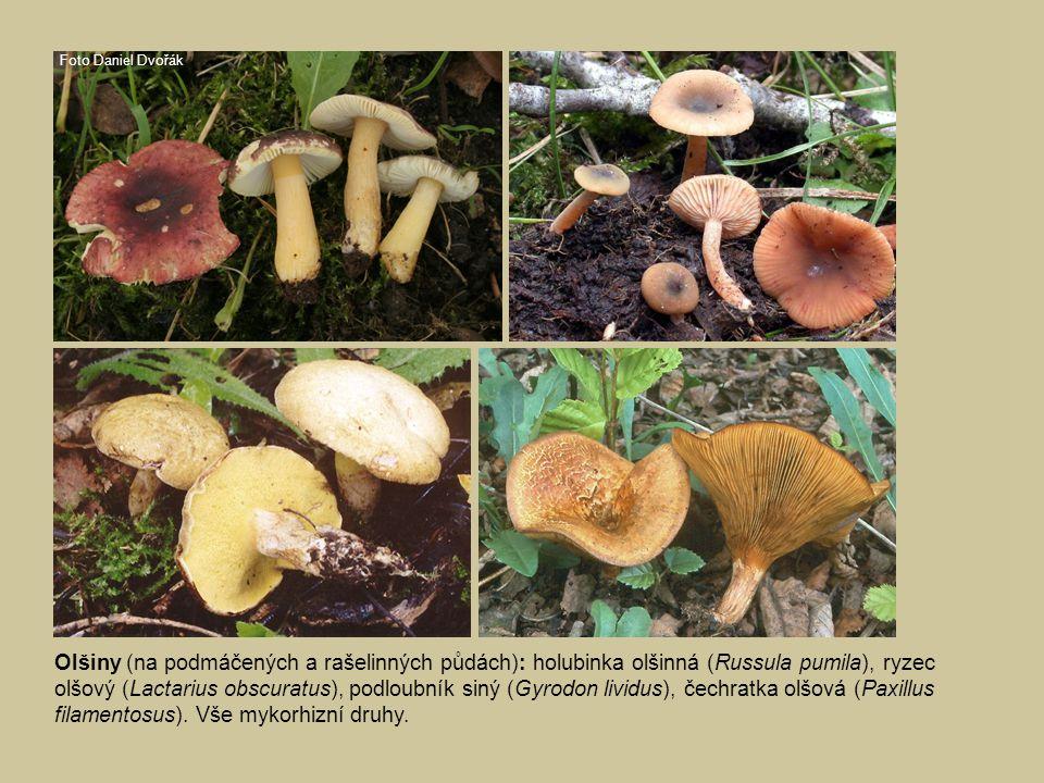 Olšiny: vlevo nahoře kržatka oděná (Alnicola melinoides) - mykorhizní druh, vpravo nahoře jehnědka olšová (Ciboria amentacea) - saprofyt na opadu.