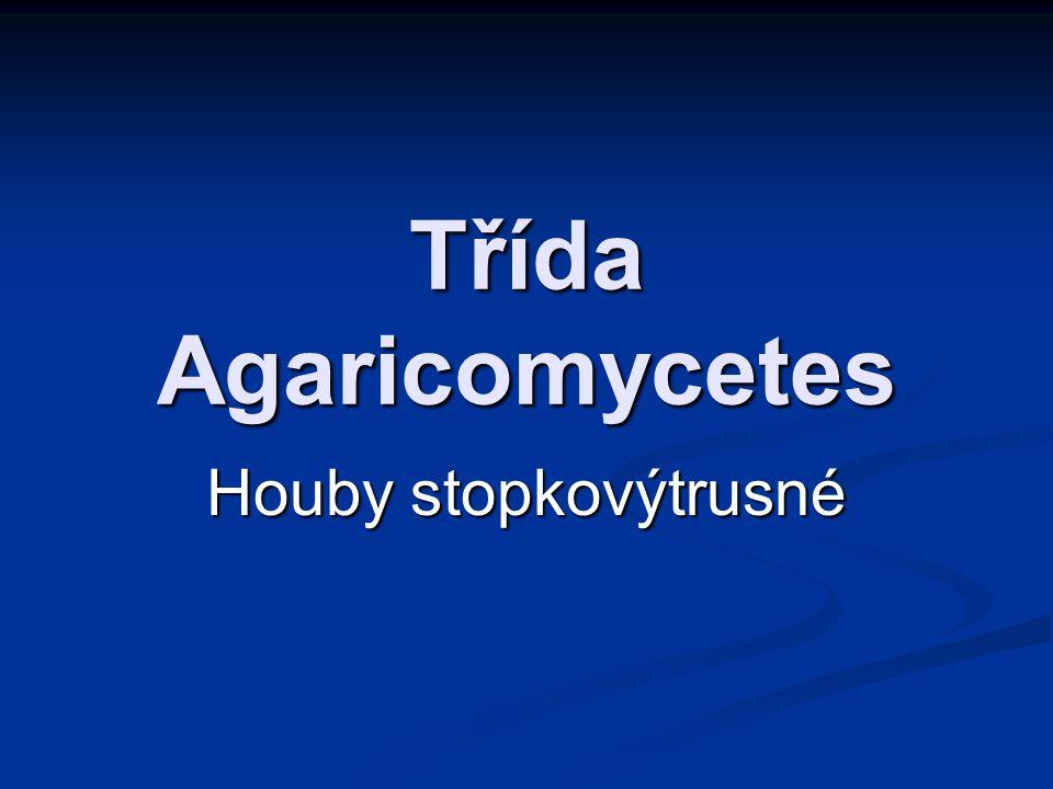 Třída Agaricomycetes Houby stopkovýtrusné