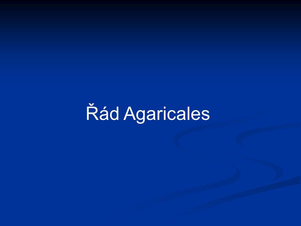 Řád Agaricales