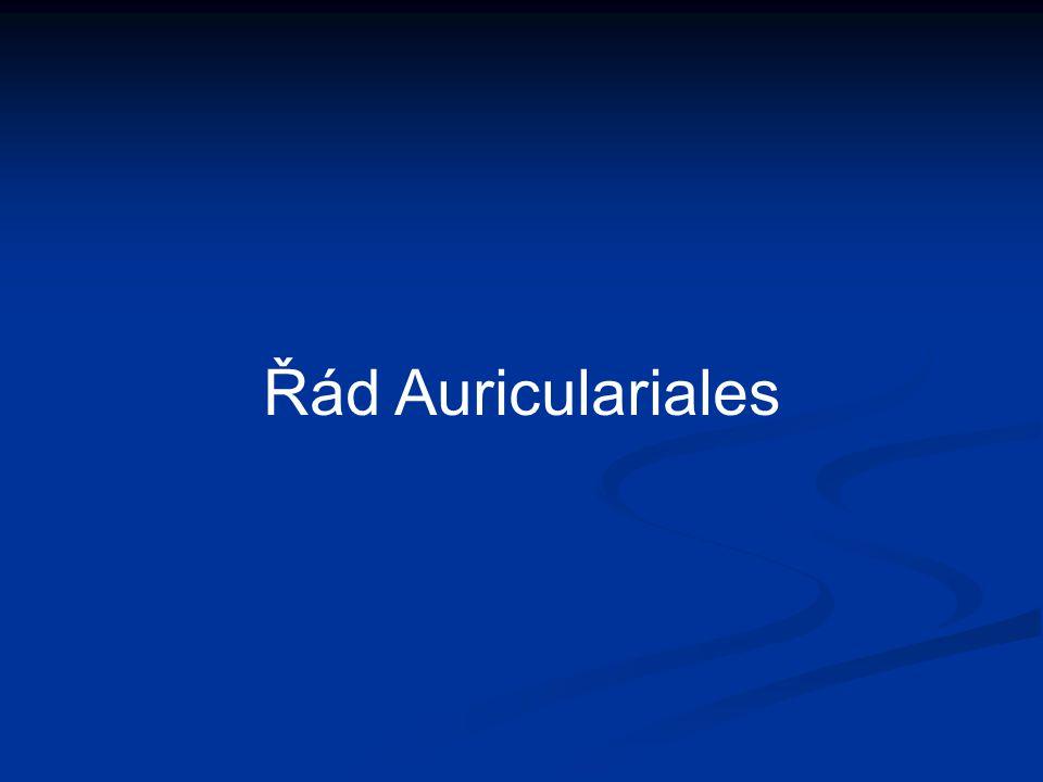 Řád Auriculariales