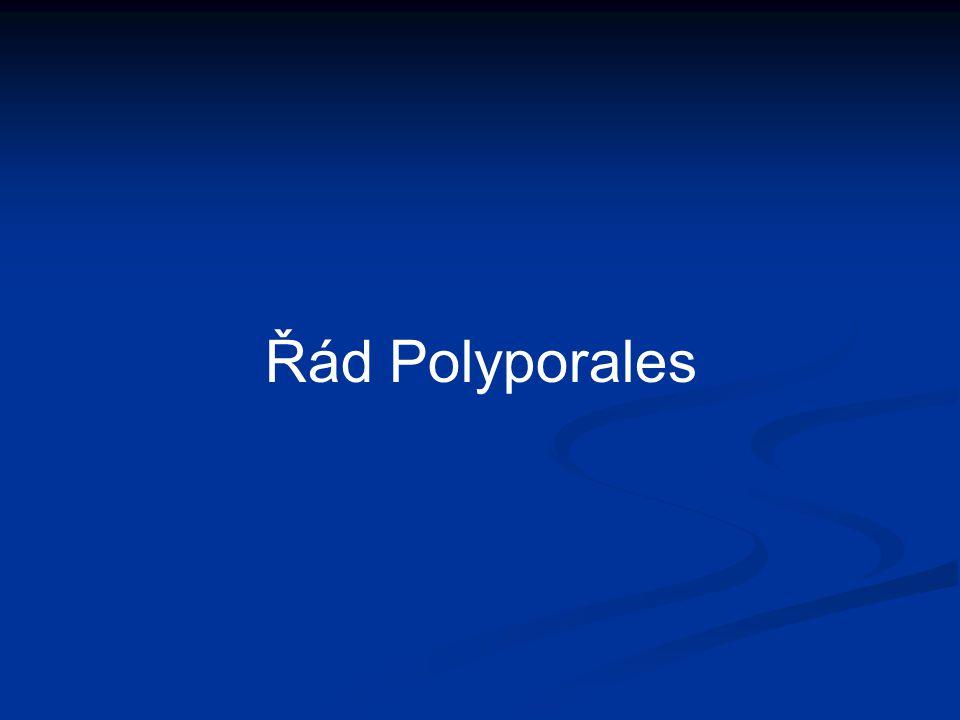 Řád Polyporales