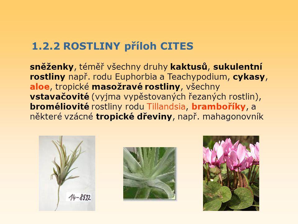 1.2.2 ROSTLINY příloh CITES sněženky, téměř všechny druhy kaktusů, sukulentní rostliny např. rodu Euphorbia a Teachypodium, cykasy, aloe, tropické mas