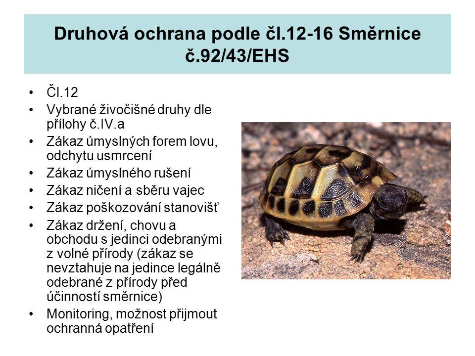 Druhová ochrana podle čl.12-16 Směrnice č.92/43/EHS Čl.12 Vybrané živočišné druhy dle přílohy č.IV.a Zákaz úmyslných forem lovu, odchytu usmrcení Zákaz úmyslného rušení Zákaz ničení a sběru vajec Zákaz poškozování stanovišť Zákaz držení, chovu a obchodu s jedinci odebranými z volné přírody (zákaz se nevztahuje na jedince legálně odebrané z přírody před účinností směrnice) Monitoring, možnost přijmout ochranná opatření