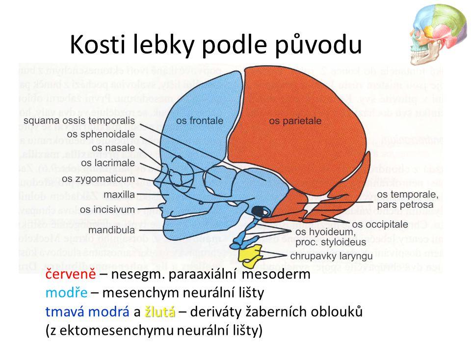 Kosti lebky podle původu žlutá červeně – nesegm. paraaxiální mesoderm modře – mesenchym neurální lišty tmavá modrá a žlutá – deriváty žaberních oblouk