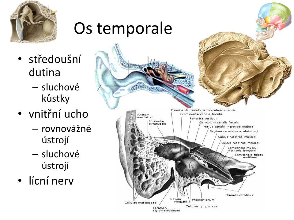 Os temporale středoušní dutina – sluchové kůstky vnitřní ucho – rovnovážné ústrojí – sluchové ústrojí lícní nerv