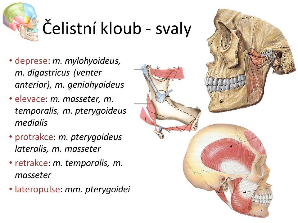 Čelistní kloub - svaly deprese: m. mylohyoideus, m. digastricus (venter anterior), m. geniohyoideus elevace: m. masseter, m. temporalis, m. pterygoide