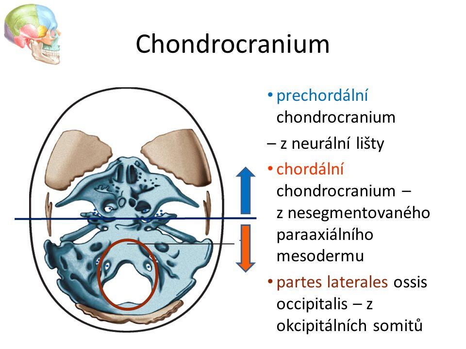 Chondrocranium prechordální chondrocranium – z neurální lišty chordální chondrocranium – z nesegmentovaného paraaxiálního mesodermu partes laterales o