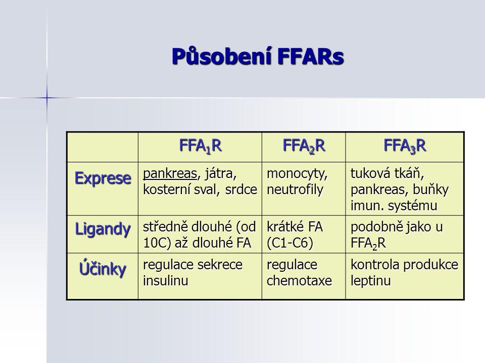 Působení FFARs FFA 1 R FFA 2 R FFA 3 R Exprese pankreas, játra, kosterní sval, srdce monocyty, neutrofily tuková tkáň, pankreas, buňky imun. systému L