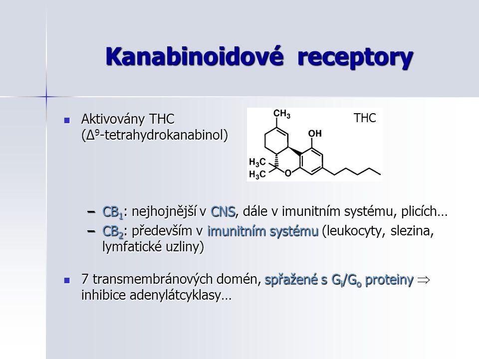 Kanabinoidové receptory Aktivovány THC (Δ 9 -tetrahydrokanabinol) Aktivovány THC (Δ 9 -tetrahydrokanabinol) –CB 1 : nejhojnější v CNS, dále v imunitní
