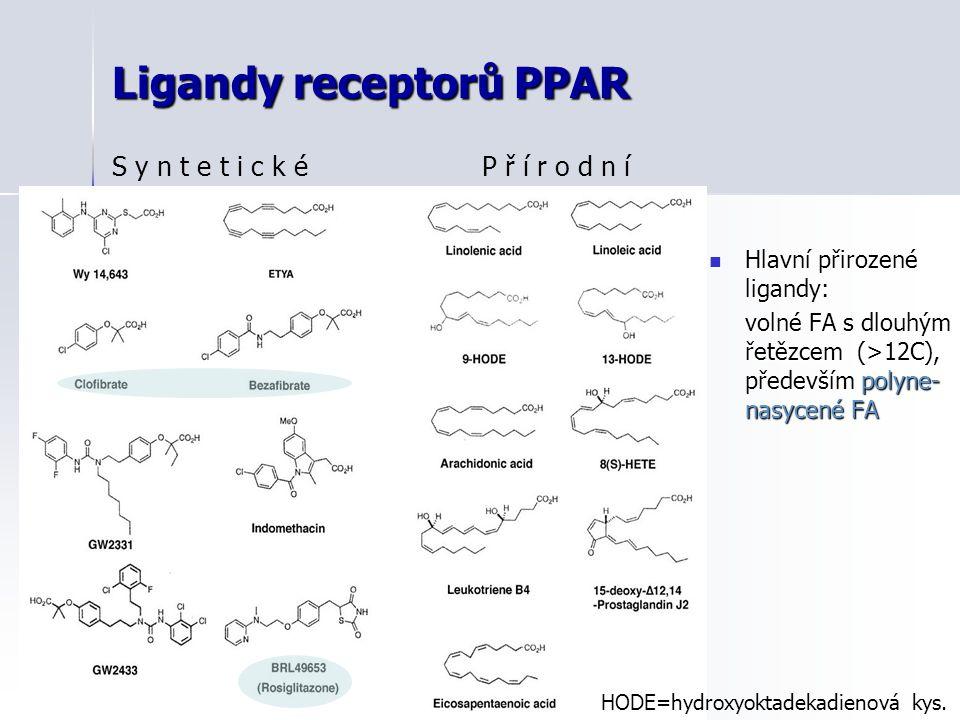 Ligandy receptorů PPAR Hlavní přirozené ligandy: Hlavní přirozené ligandy: volné FA s dlouhým řetězcem (>12C), především polyne- nasycené FA S y n t e