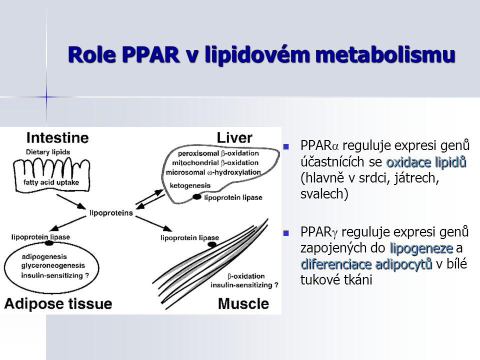 Role PPAR v lipidovém metabolismu PPAR α reguluje expresi genů účastnících se oxidace lipidů (hlavně v srdci, játrech, svalech) PPAR α reguluje expres