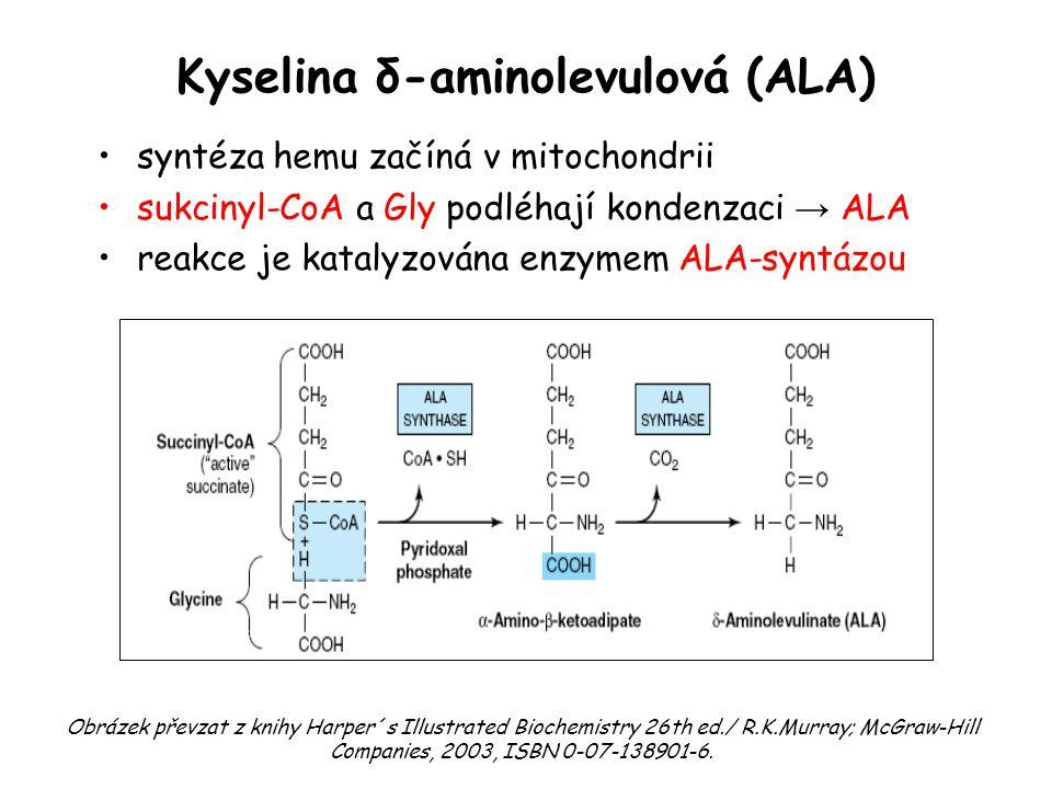 Kyselina δ-aminolevulová (ALA) syntéza hemu začíná v mitochondrii sukcinyl-CoA a Gly podléhají kondenzaci → ALA reakce je katalyzována enzymem ALA-syn
