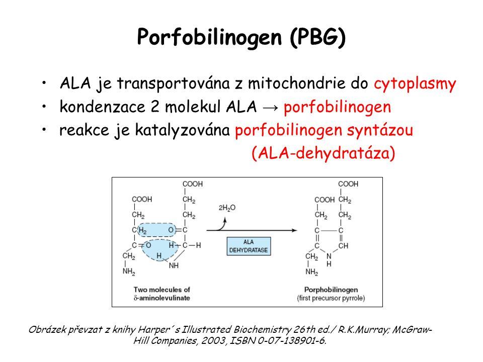 Porfobilinogen (PBG) ALA je transportována z mitochondrie do cytoplasmy kondenzace 2 molekul ALA → porfobilinogen reakce je katalyzována porfobilinoge