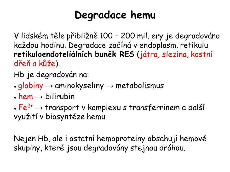 Degradace hemu V lidském těle přibližně 100 – 200 mil. ery je degradováno každou hodinu. Degradace začíná v endoplasm. retikulu retikuloendoteliálních