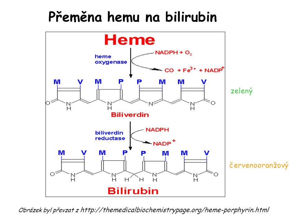 Přeměna hemu na bilirubin Obrázek byl převzat z http://themedicalbiochemistrypage.org/heme-porphyrin.html zelený červenooranžový