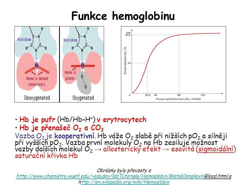 Funkce hemoglobinu Hb je pufr (Hb/Hb-H + ) v erytrocytech Hb je přenašeč O 2 a CO 2 Vazba O 2 je kooperativní. Hb váže O 2 slabě při nižších pO 2 a si