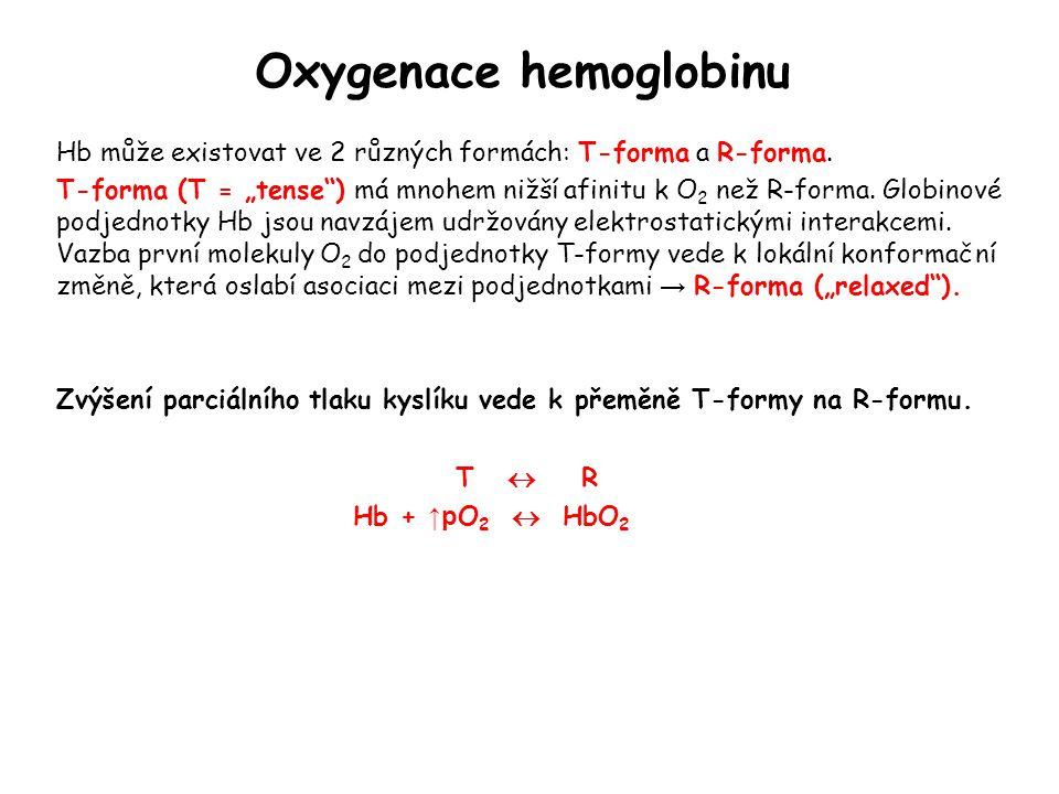 """Oxygenace hemoglobinu Hb může existovat ve 2 různých formách: T-forma a R-forma. T-forma (T = """"tense"""") má mnohem nižší afinitu k O 2 než R-forma. Glob"""