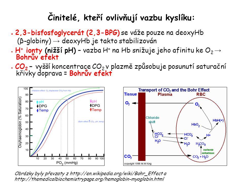 Činitelé, kteří ovlivňují vazbu kyslíku: ● 2,3-bisfosfoglycerát (2,3-BPG) se váže pouze na deoxyHb (β-globiny) → deoxyHb je takto stabilizován ● H + i