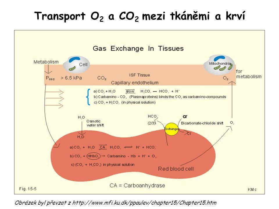 Transport O 2 a CO 2 mezi tkáněmi a krví Obrázek byl převzat z http://www.mfi.ku.dk/ppaulev/chapter15/Chapter15.htm