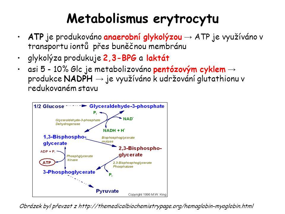 Metabolismus erytrocytu ATP je produkováno anaerobní glykolýzou → ATP je využíváno v transportu iontů přes buněčnou membránu glykolýza produkuje 2,3-B