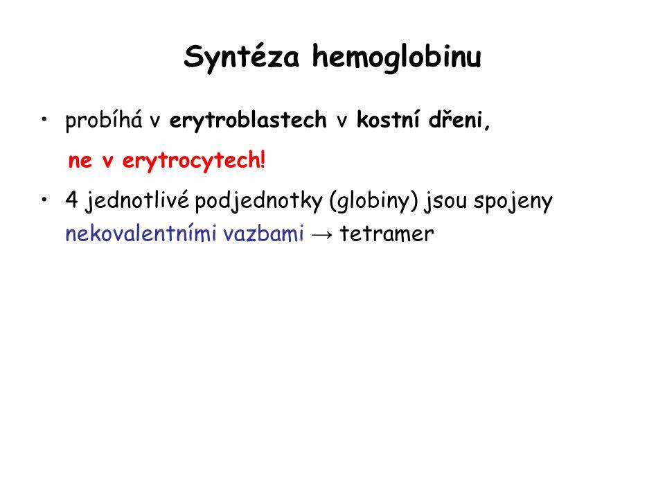 Syntéza hemoglobinu probíhá v erytroblastech v kostní dřeni, ne v erytrocytech! 4 jednotlivé podjednotky (globiny) jsou spojeny nekovalentními vazbami