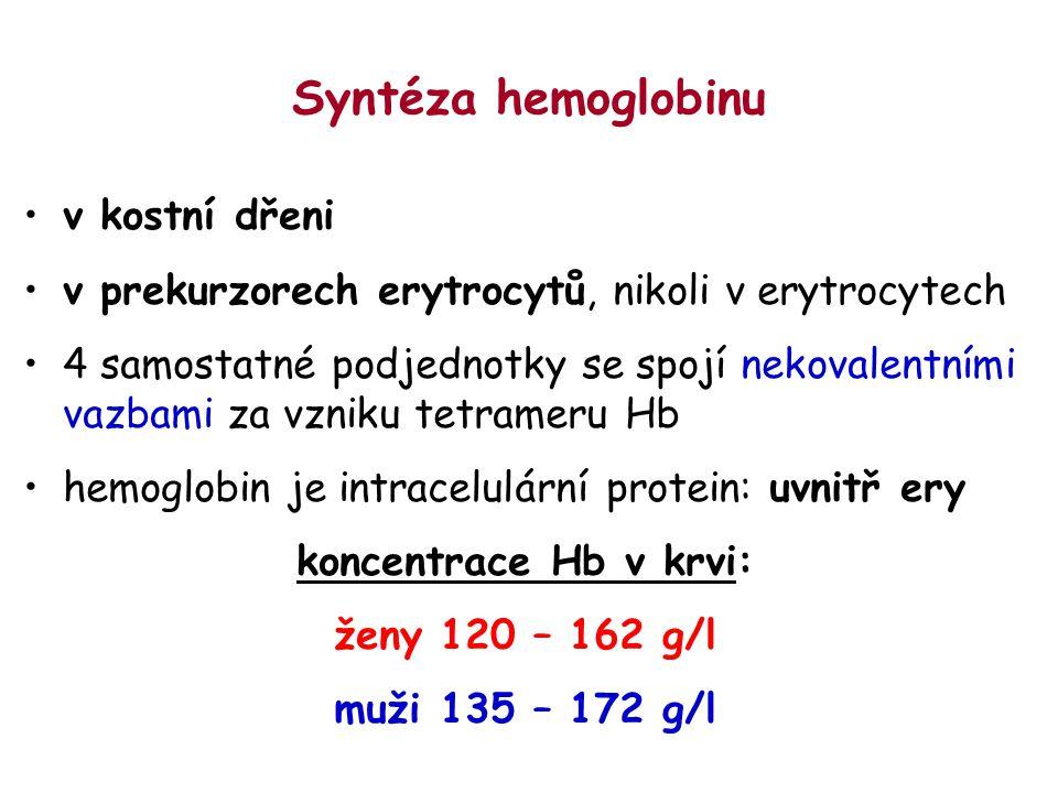 Syntéza hemoglobinu v kostní dřeni v prekurzorech erytrocytů, nikoli v erytrocytech 4 samostatné podjednotky se spojí nekovalentními vazbami za vzniku