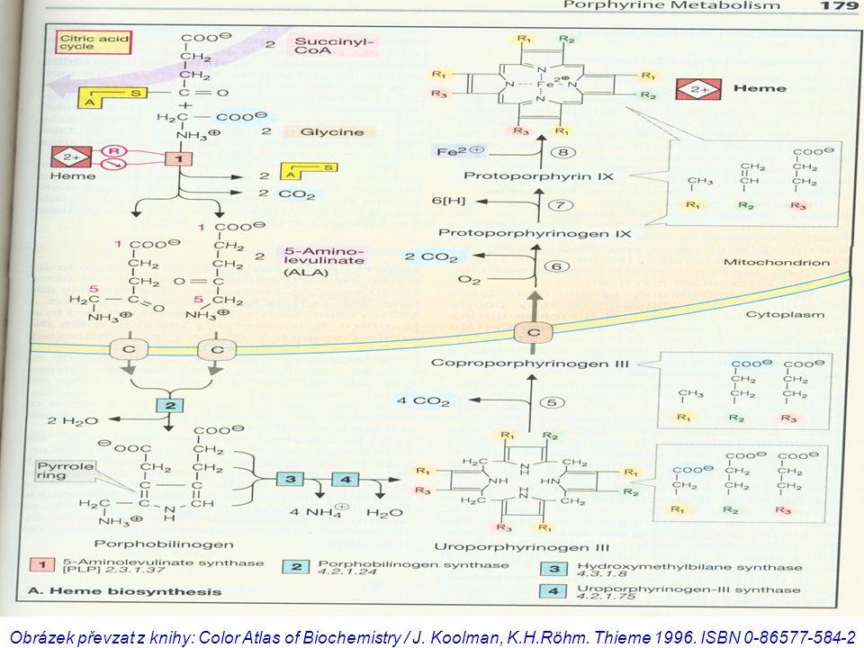 Obrázek převzat z knihy: Color Atlas of Biochemistry / J. Koolman, K.H.Röhm. Thieme 1996. ISBN 0-86577-584-2