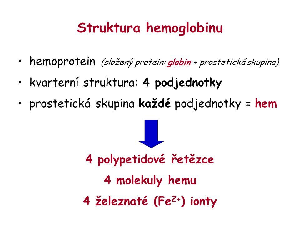 Struktura hemoglobinu hemoprotein (složený protein: globin + prostetická skupina) kvarterní struktura: 4 podjednotky prostetická skupina každé podjedn