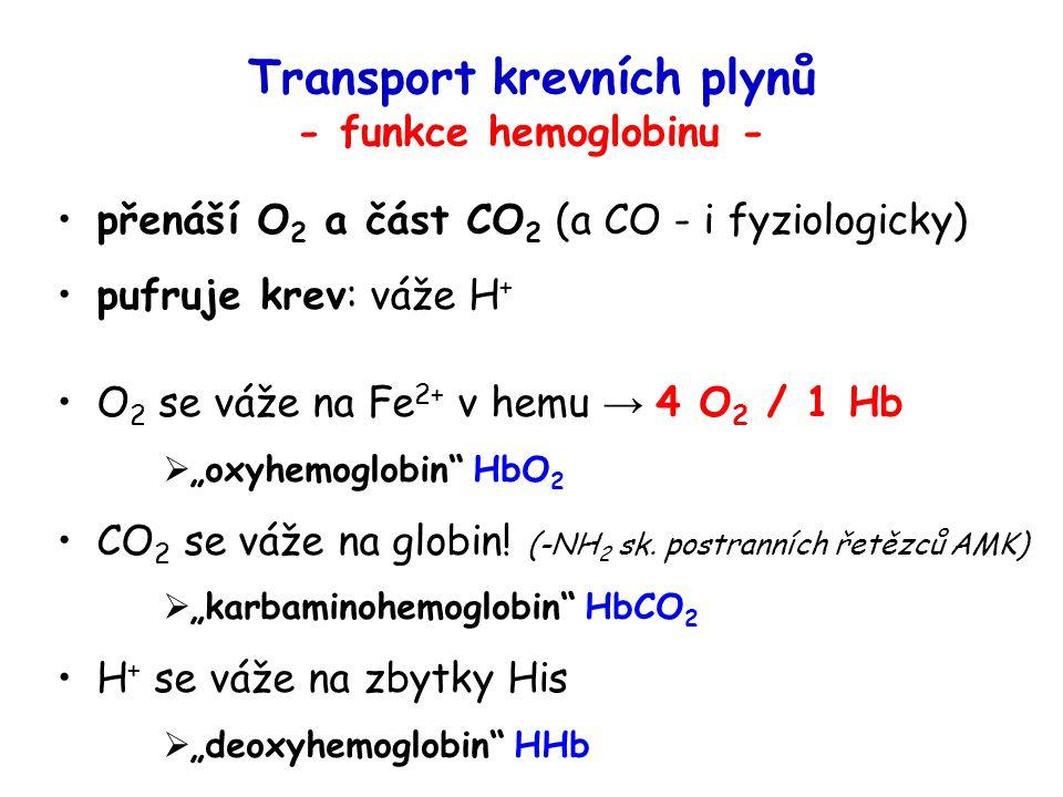 Transport krevních plynů - funkce hemoglobinu - přenáší O 2 a část CO 2 (a CO - i fyziologicky) pufruje krev: váže H + O 2 se váže na Fe 2+ v hemu → 4