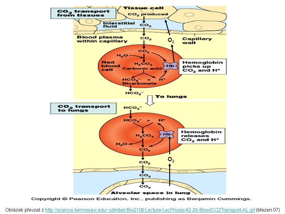 Obrázek převzat z http://science.kennesaw.edu/~jdirnber/Bio2108/Lecture/LecPhysio/42-29-BloodCO2Transport-AL.gif (březen 07)http://science.kennesaw.ed