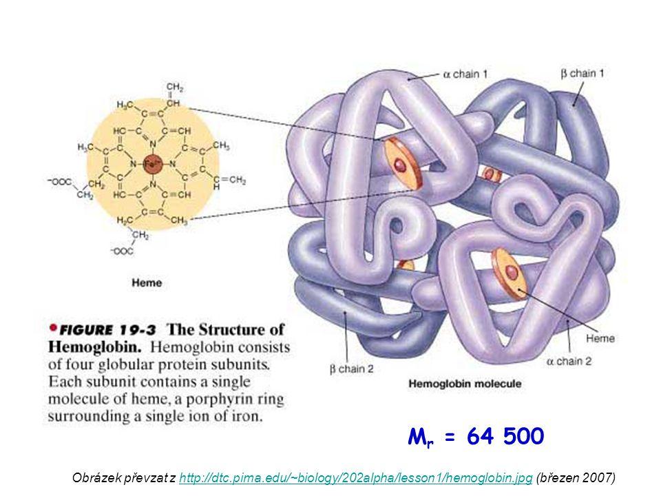 """Obrázky převzaty z http://www.virtuallaboratory.net/Biofundamentals/lectureNotes/AllGraphics/myoglobinSurface.jpg a z http://courses.washington.edu/conj/protein/hemo.gif (březen 2007)http://www.virtuallaboratory.net/Biofundamentals/lectureNotes/AllGraphics/myoglobinSurface.jpghttp://courses.washington.edu/conj/protein/hemo.gif hemoglobin HEM MYOGLOBIN nemá kvarterní strukturu, má pouze 1 polypeptidový řetězec slouží ve svalu k vazbě O 2 """"do zásoby váže kyslík pevněji než hemoglobin"""