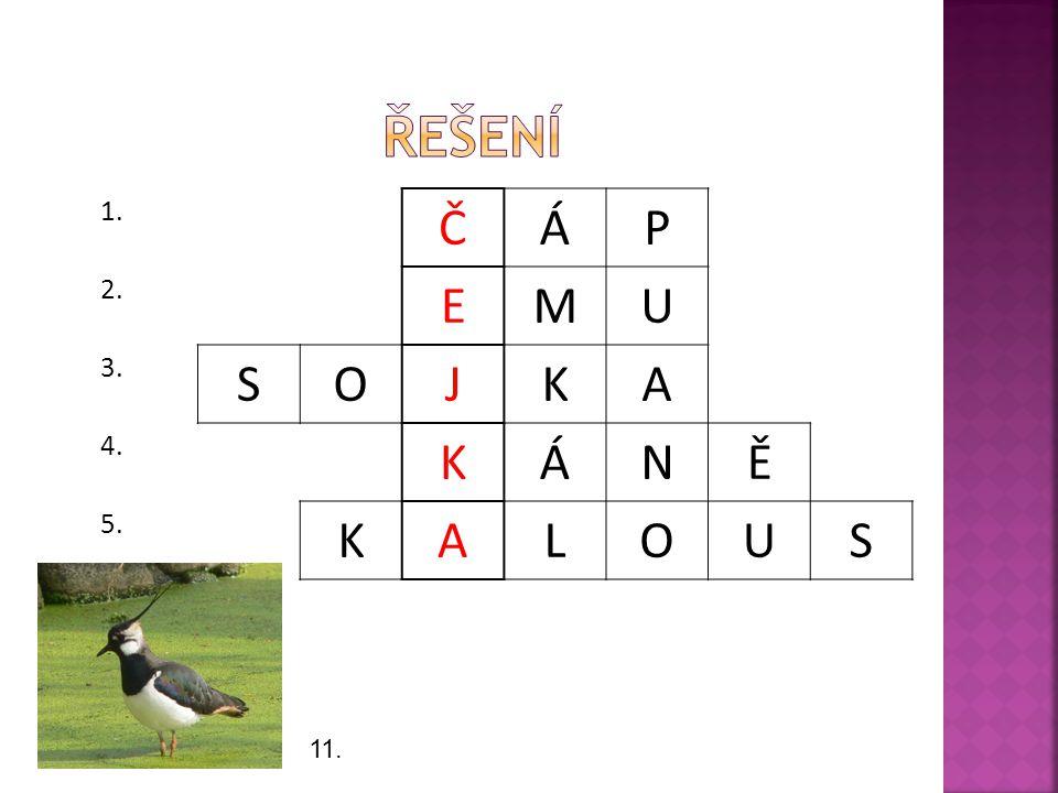 1. ČÁP 2. EMU 3. SOJKA 4. KÁNĚ 5. KALOUS 11.