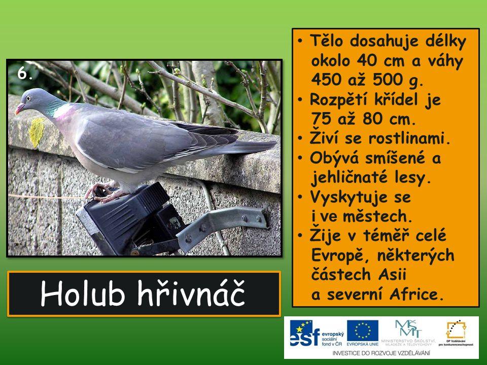Poštolka obecná Obvykle váží 180 až 220 g.Rozpětím křídel je 68 až 80 cm.