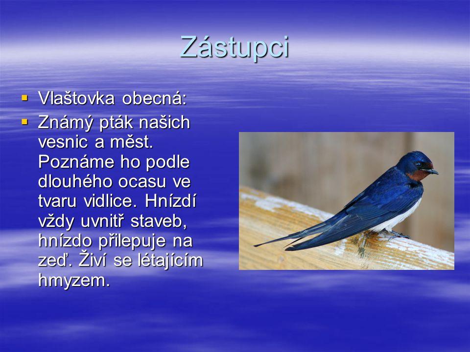 Zástupci  Vlaštovka obecná:  Známý pták našich vesnic a měst. Poznáme ho podle dlouhého ocasu ve tvaru vidlice. Hnízdí vždy uvnitř staveb, hnízdo př