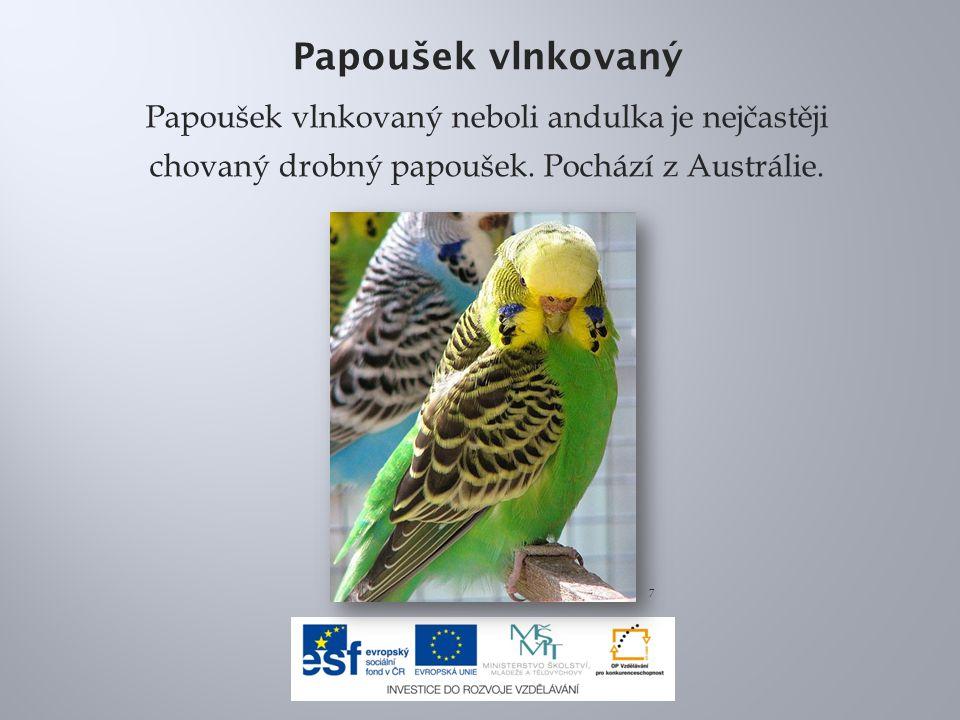 Papoušek vlnkovaný Papoušek vlnkovaný neboli andulka je nejčastěji chovaný drobný papoušek.