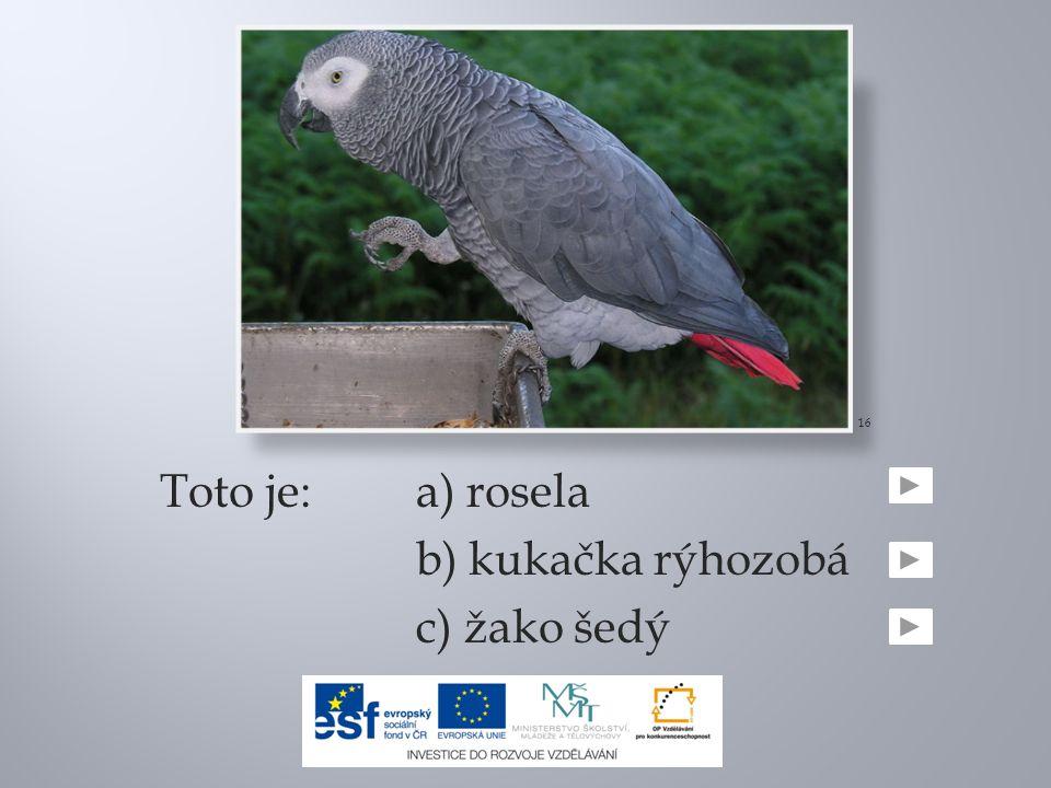 Toto je:a) rosela b) kukačka rýhozobá c) žako šedý 16