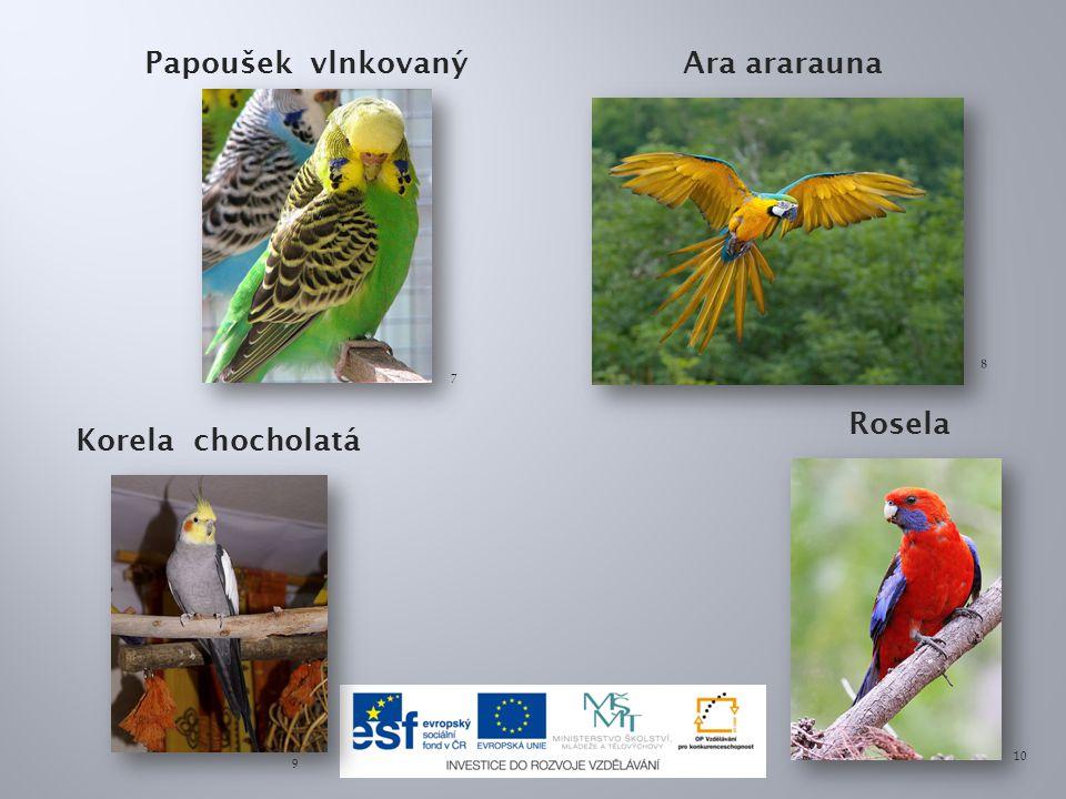 Papoušek vlnkovanýAra ararauna Korela chocholatá Rosela 7 8 9 10