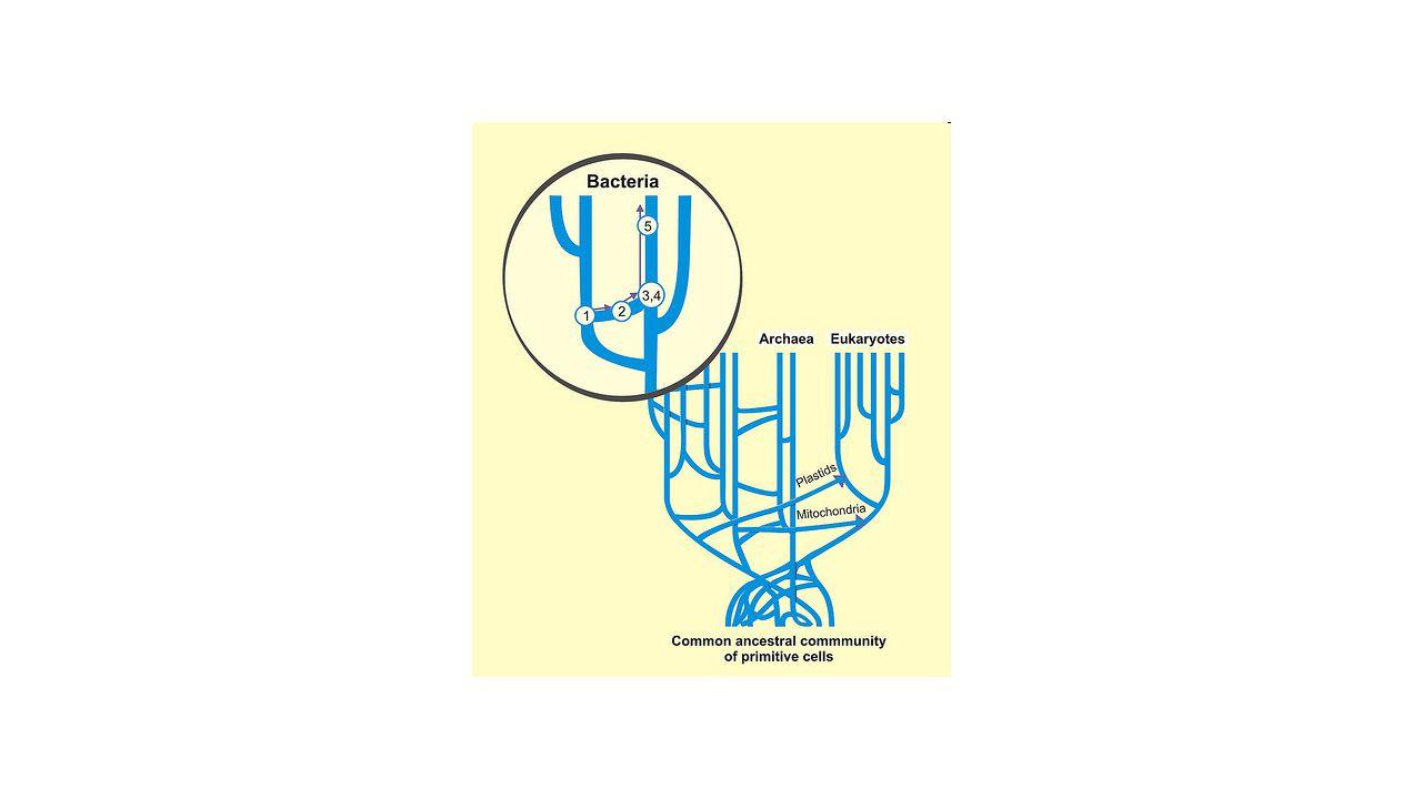 Předpoklady rozpoznání signálu Příjem (tj.