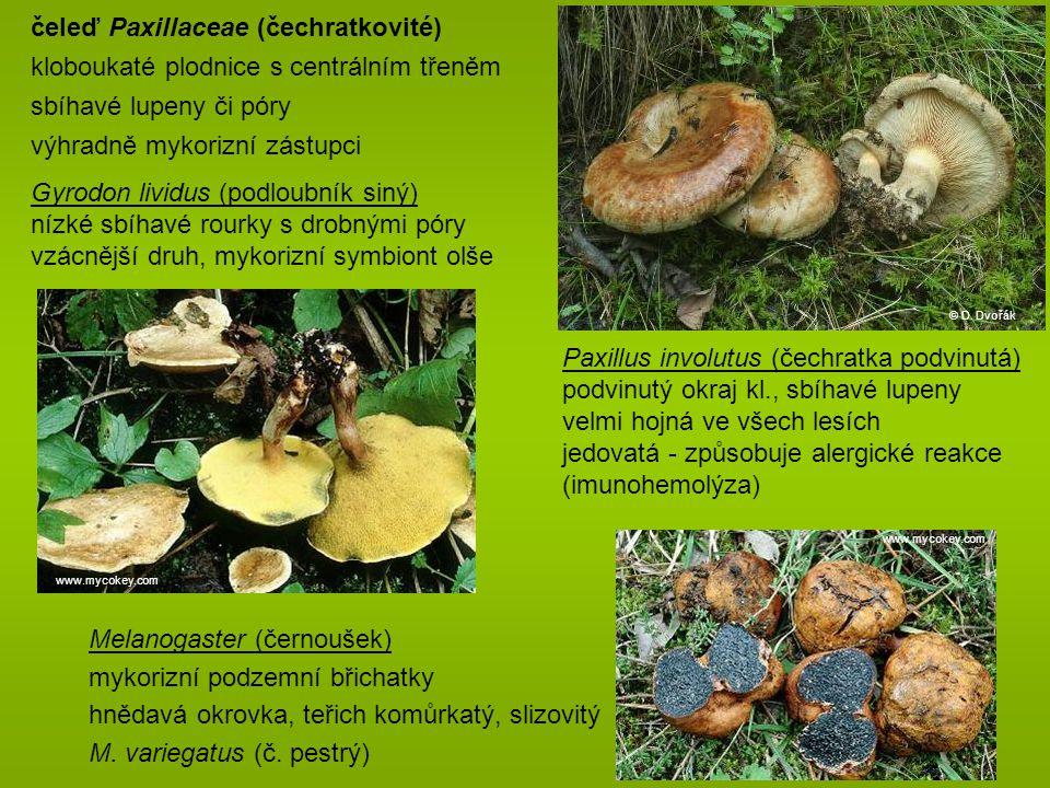 Paxillus involutus (čechratka podvinutá) podvinutý okraj kl., sbíhavé lupeny velmi hojná ve všech lesích jedovatá - způsobuje alergické reakce (imunohemolýza) čeleď Paxillaceae (čechratkovité) kloboukaté plodnice s centrálním třeněm sbíhavé lupeny či póry výhradně mykorizní zástupci Gyrodon lividus (podloubník siný) nízké sbíhavé rourky s drobnými póry vzácnější druh, mykorizní symbiont olše www.mycokey.com © D.