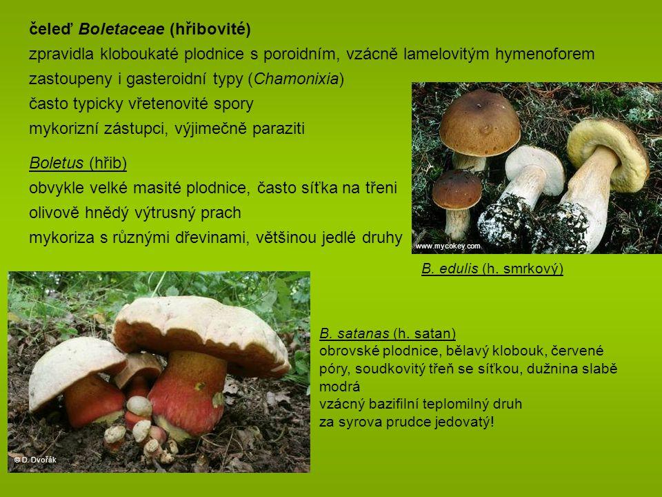 Boletus (hřib) obvykle velké masité plodnice, často síťka na třeni olivově hnědý výtrusný prach mykoriza s různými dřevinami, většinou jedlé druhy B.