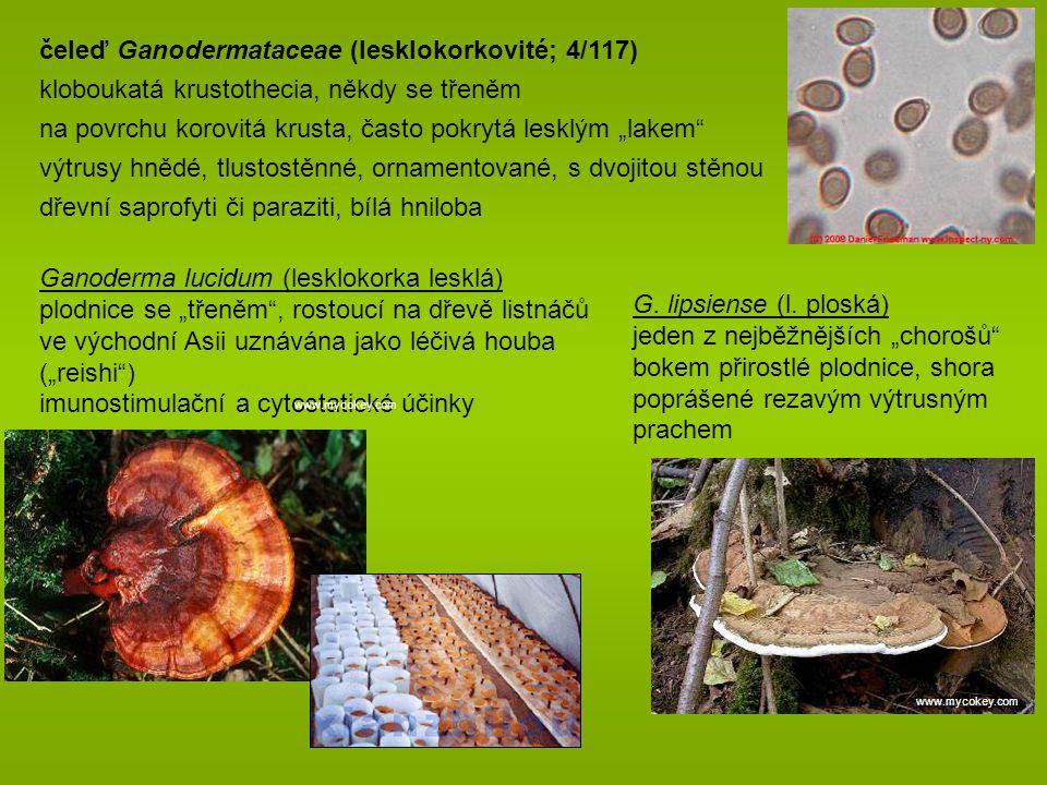 """čeleď Ganodermataceae (lesklokorkovité; 4/117) kloboukatá krustothecia, někdy se třeněm na povrchu korovitá krusta, často pokrytá lesklým """"lakem výtrusy hnědé, tlustostěnné, ornamentované, s dvojitou stěnou dřevní saprofyti či paraziti, bílá hniloba Ganoderma lucidum (lesklokorka lesklá) plodnice se """"třeněm , rostoucí na dřevě listnáčů ve východní Asii uznávána jako léčivá houba (""""reishi ) imunostimulační a cytostatické účinky G."""